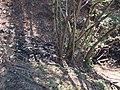 Borro di Vitiano - panoramio.jpg