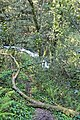 Bosque - Bertamirans - Rio Sar - 003.JPG