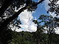 Bosque dos Passuarés - Jardim Botânico de SP.JPG