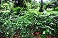 Botanic garden limbe14.jpg