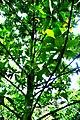 Botanic garden limbe60.jpg