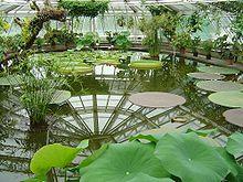 Delicieux Pavilion Victoria. The Berlin Dahlem Botanical Garden ...