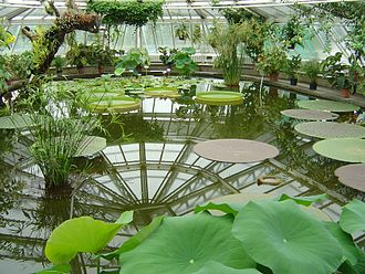 Berlin-Dahlem Botanical Garden and Botanical Museum - Pavilion Victoria.
