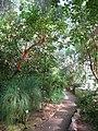 Botanischer Garten der Universität Würzburg - IMG 6825.JPG