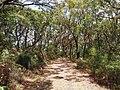 Botany Bay National Park - panoramio (32).jpg