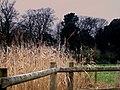 Bowling Green Marsh Nature Reserve Topsham - geograph.org.uk - 1113567.jpg