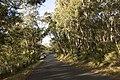 Bowral NSW 2576, Australia - panoramio (137).jpg