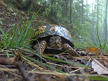 Box-turtle-cove-mtn-trail-tn1.jpg