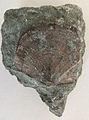 Brachiopode.jpg