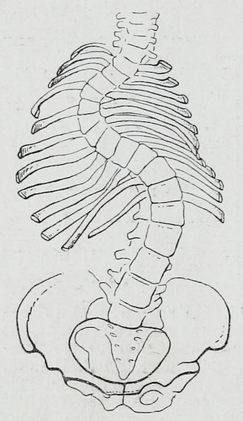 Braus 1921 84.png