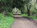 Breamore Wood - geograph.org.uk - 1276590.jpg