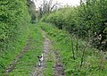 Bridleway by canal, Stockton (3) - geograph.org.uk - 1276903.jpg