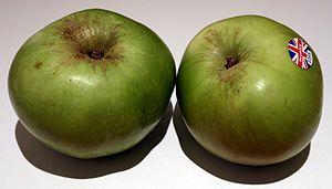 Bramley apple - 'Bramley's Seedling' apples from Nottinghamshire