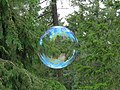 Bubbles in the Woods.jpg