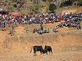 Bull fight NP.JPG