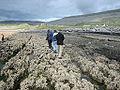 Burren tidepools (lelandpaul).jpg