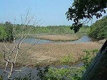Bushmill Stream.jpg