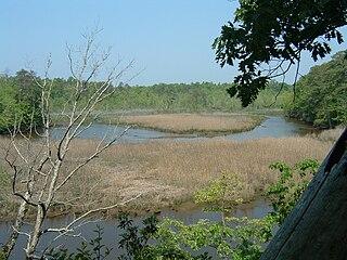 Bush Mill Stream Natural Area Preserve Virginia, USA