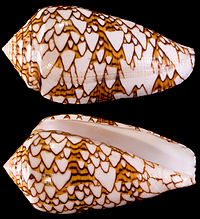 Cône textileI