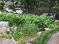 CG and plants rocks.jpg