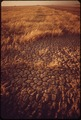 CRACKED EARTH-A RESULT OF IRRIGATION AND INTENSE DRY HEAT - NARA - 549034.tif