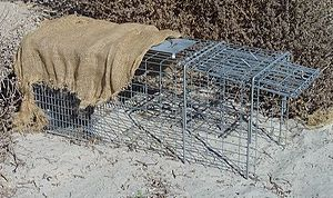 English: Cage trap with shade cloth to protect...