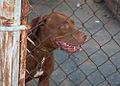 Caminata por los perros y animales Maracaibo 2012.jpg