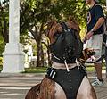 Caminata por los perros y animales Maracaibo 2012 (26).jpg