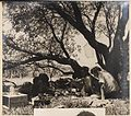 Camp scene from Camping trips on Culburra Beach by Max Dupain and Olive Cotton (12825185515) (2).jpg
