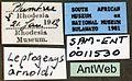 Camponotus dufouri sam-ent-011530 label 1.jpg