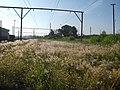 Capim Mar-2012.. - panoramio.jpg
