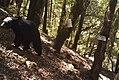 Carnivore camera Wildlife photos from the Wild Rogue Wilderness (19104302243).jpg