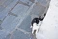Cat in an alley in Lindos, Rhodes.jpg