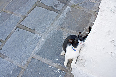 Cat in an alley in Lindos, Rhodes.jpg