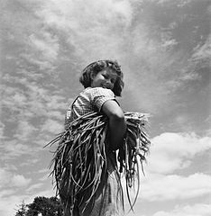 Cecil Beaton Photographs- Women's Horticultural College, Waterperry House, Oxfordshire, 1943 DB263.jpg