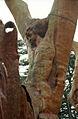 مدينة الارز لبنان 78px-Cedars21(js).jp