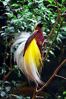 Fauna of New Guinea