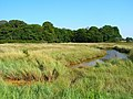 Chalkdock Marsh - geograph.org.uk - 523236.jpg