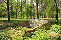 Cherkasy Sosnivka Park 04.JPG