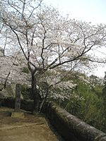 Cherryblossoms at oka-castle1.jpg