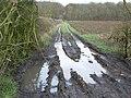 Cheveral Wood - geograph.org.uk - 305774.jpg