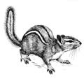 Chipmunk (PSF).png