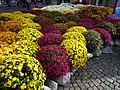 Chrysanthema 2019.jpg