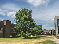 Churchill College Cambridge - Central area and Hepworth.jpg