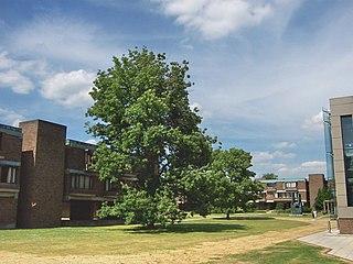 Churchill College, Cambridge college of the University of Cambridge