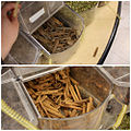 Cinnamon & Cassia (5193854101).jpg