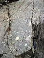Clast-rich mixtite (Coleman Member, Gowganda Formation, Paleoproterozoic, ~2.3 Ga; Percival Lake roadcut, Ontario, Canada) 27 (32783973947).jpg