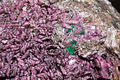 Cobaltocalcite, malachite 7100.5034.jpg