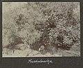 Collectie NMvWereldculturen, RV-A102-1-181, 'Rustplaatsje'. Foto- G.M. Versteeg, 1903-1904.jpg