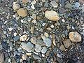 Colourful stones, Giri river.jpeg